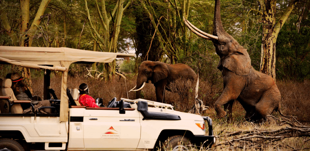 Visitors to Tsavo National Park Viewing Kenya's Red Elephants during a visit to Finch Hattons