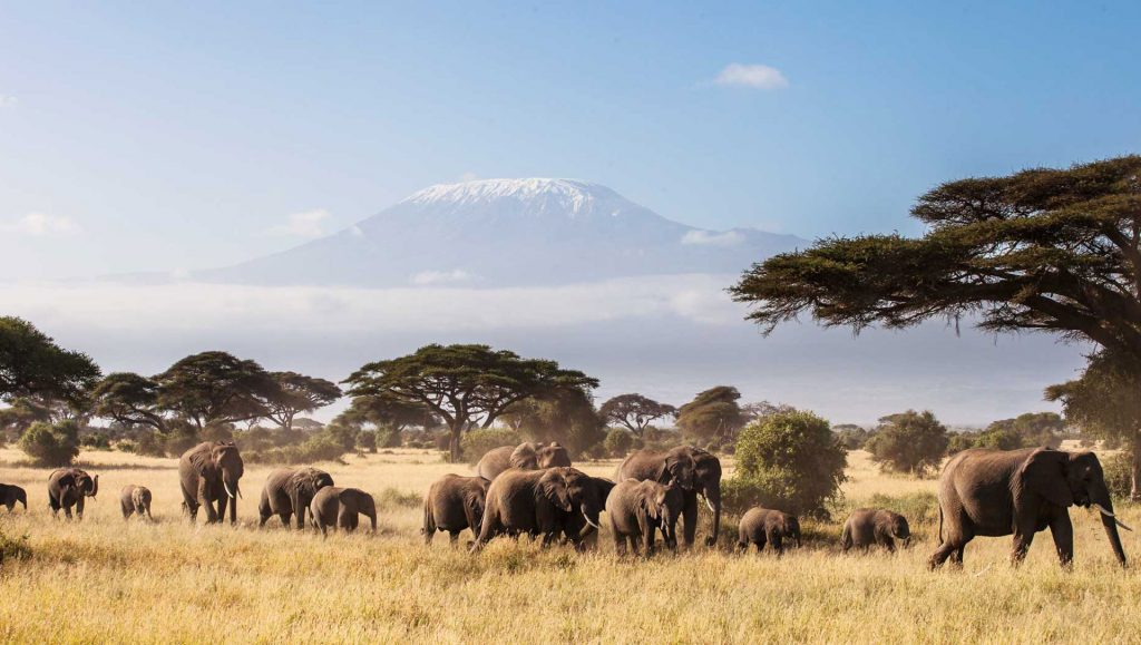 African Bush around Finch Hattons campsite,  with Elephants in foreground and Kilimanjaro in the background